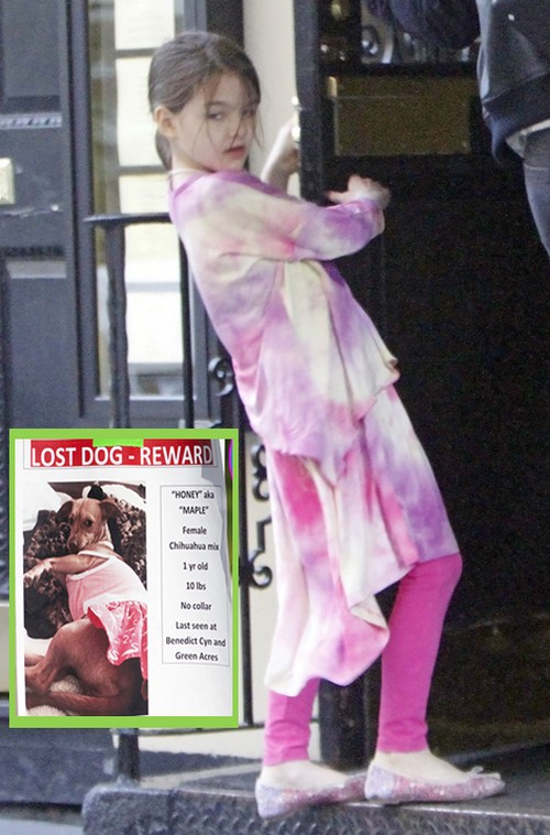 Suri Cruise's Lost Dog Found: Blame Katie Holmes For Missing Chihuahua - Did She Buy A Replacement Puppy?