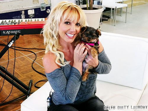 Britney Spears Is An Animal Hoarder?