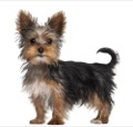6 Most Popular Dog Breeds