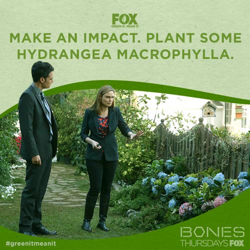 "Bones Recap - Mortality Lesson: Season 10 Episode 12 ""The Teacher in the Books"""