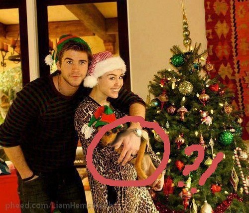 Miley Cyrus and Liam Hemsworth Already Married (Photo)