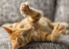 Cat Declawing – The Painful Facts