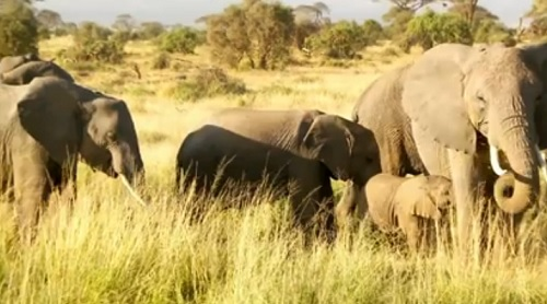 earth-focus-illicit-ivory