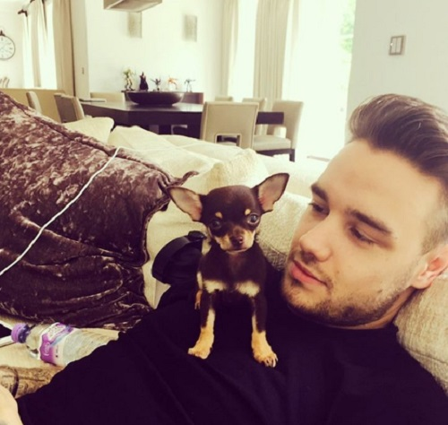 Liam Payne Expecting Baby - Pregnant Cheryl Cole Spotted With Baby Bump