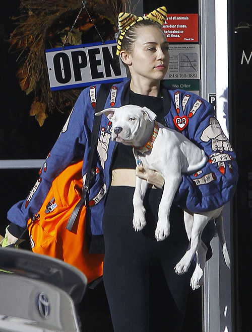 Miley Cyrus and Jared Leto Romance? Rumors Heat Up About Casual Hookup